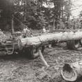 Langholzverladung