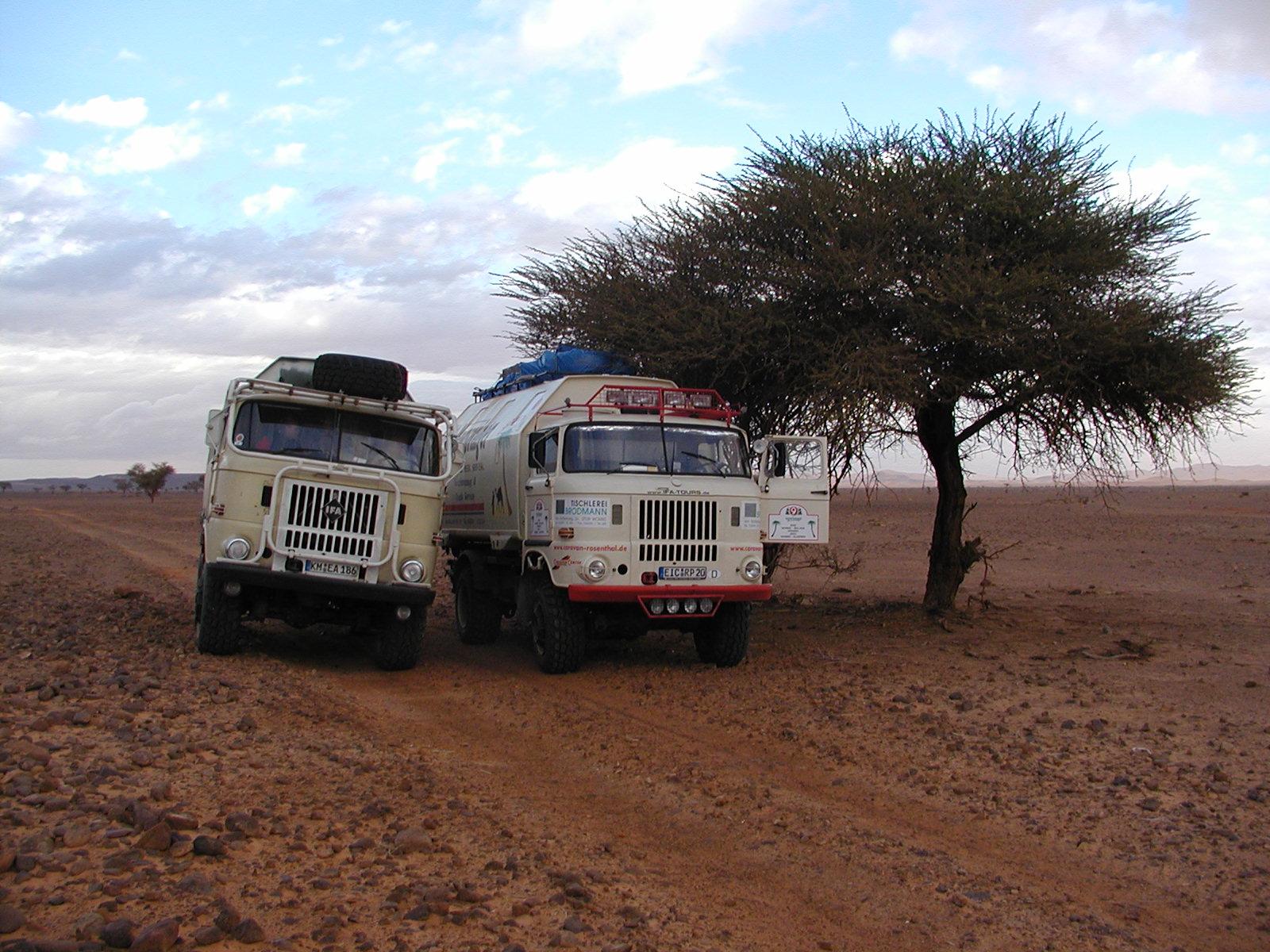 IFA W50 unterwegs in Algerien und der Sahara